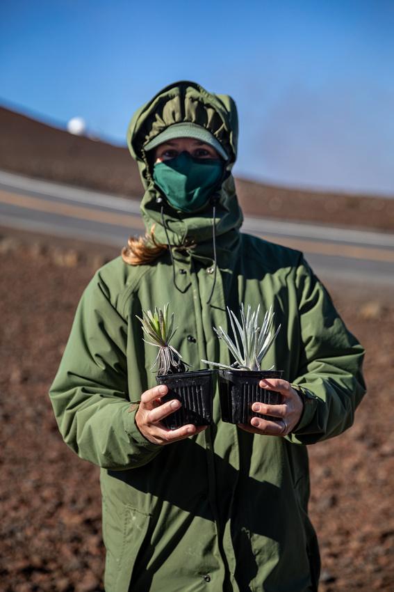 Silversword-Planting-Haleakala-Oct3020-015