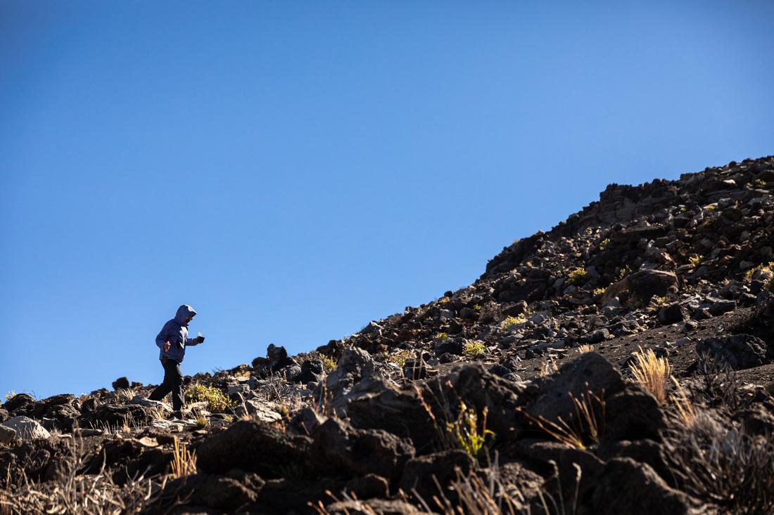 Silversword-Planting-Haleakala-Oct3020-040