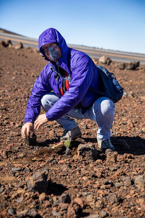 Silversword-Planting-Haleakala-Oct3020-054
